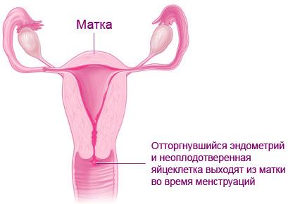 Нередко за 7-10 дней до менструации у женщин портится настроение, набухает грудь, тело становится мягкое, а вес увеличивается на 2-3 кг. Затем все это приходит в норму. Что же делать в этом случае? Это вопрос исключительно гормонального фона женщины, ее организм готовится к беременности. Начинает вырабатываться гормон пролактин, который способствует задержке в организме всевозможных веществ, чтобы было на чем растить плод в теле женщины. В организме также задерживается жидкость, и вес тела соответственно увеличивается. До этого женским организмом руководил эргостерон, который возбуждает, дает интерес к внешней среде, потому что нужно найти полового партнера, женщине более интересно и весело жить. Пролактин же наоборот заставляет сосредоточиться на себе, закрыться от окружающего мира и готовиться к беременности. Конечно, женщина в этот период чувствует себя намного хуже, чем обычно. На кого-то это действует больше, на кого-то меньше.